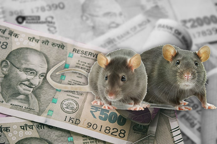rats-chew-off-vegetable-farmers-savings-which-he-saved-for-abdominal-operation-United-Maharashtra